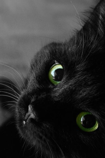 gatti-neri-pellicce