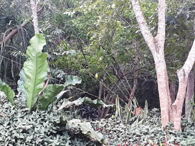 La jungla intorno